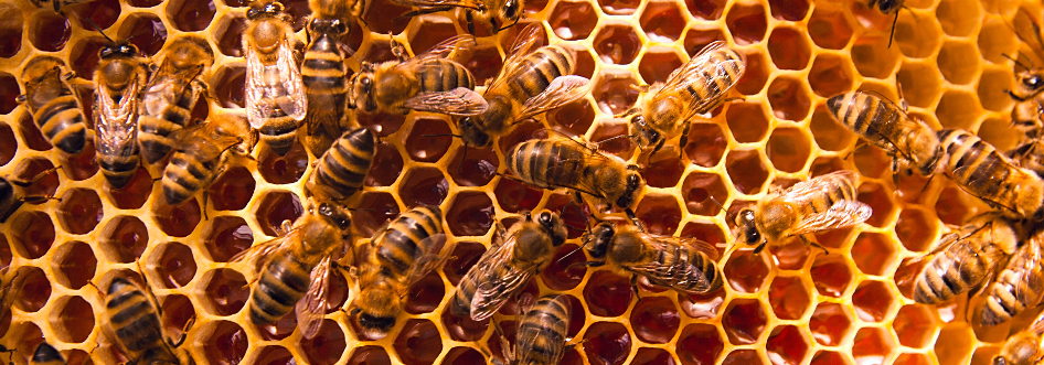 Honey Bees: Photo BuzzCloud