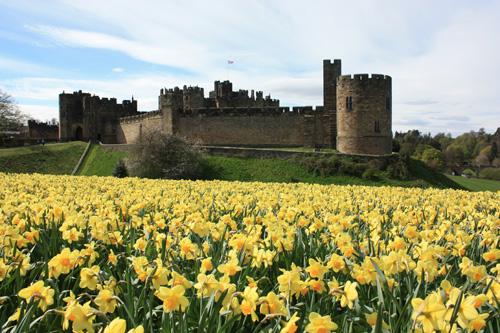 Alnwick Castle in the spring