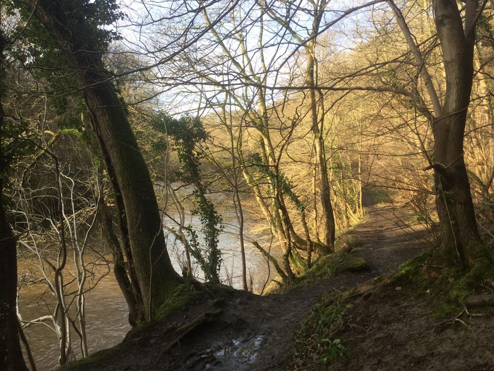 Kepier Wood Durham