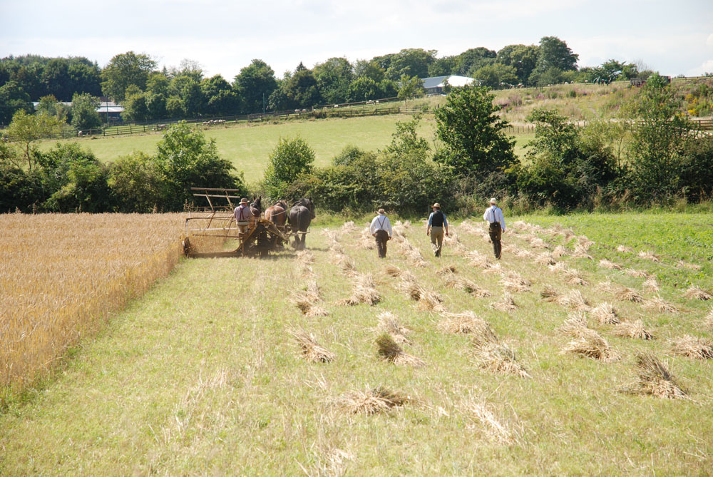 Farming old style at Beamish Museum