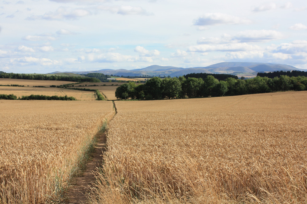 View of the Cheviots from the Duddo stones.