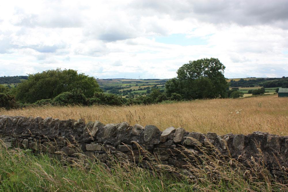 Countryside near Cornsay Colliery