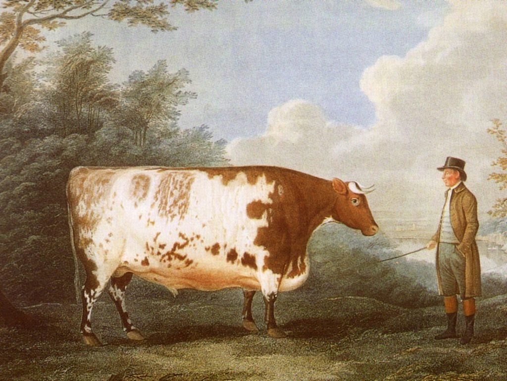 The Durham Ox