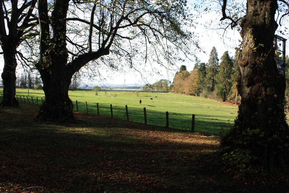Parkland at Chillingham