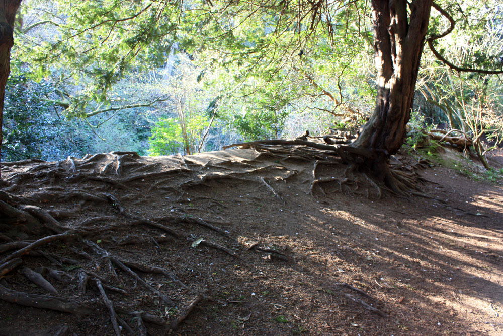 Trees, Jesmond Dene