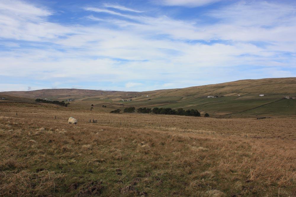 Moorland near Cow Green, Teesdale