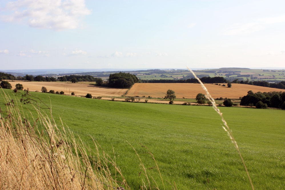 Scenery in the Chipchase - Birtley area