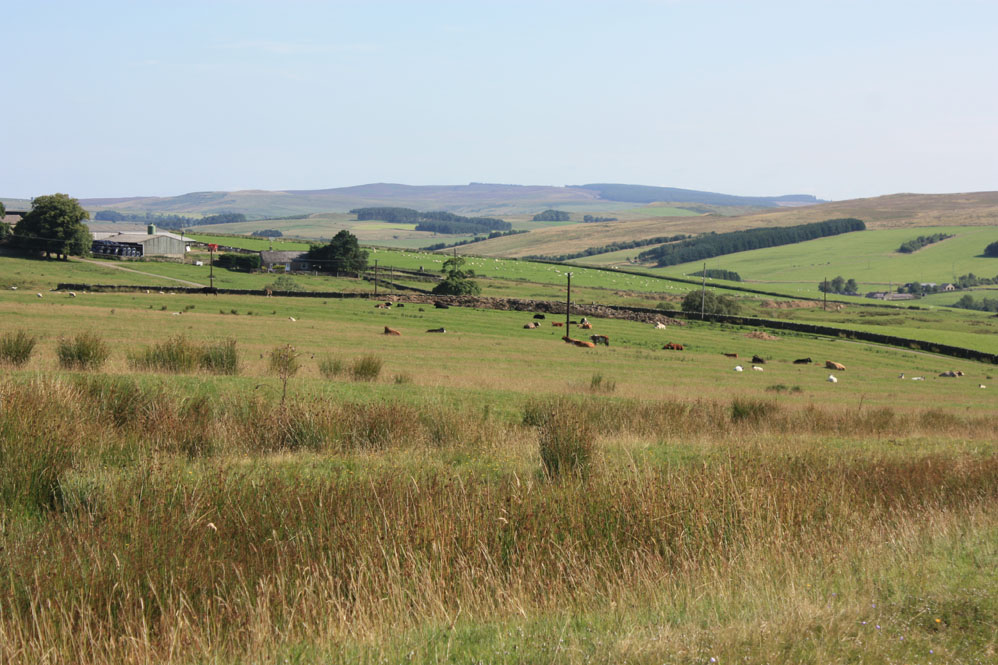 Scenery near Corsenside