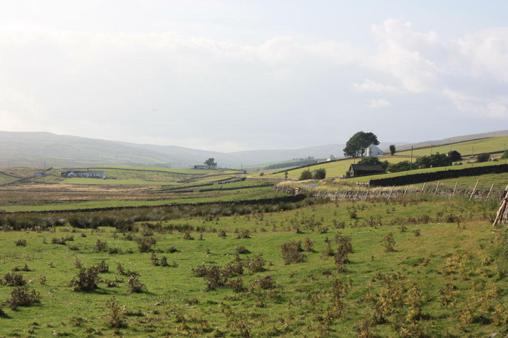 Forest in Teesdale scenery