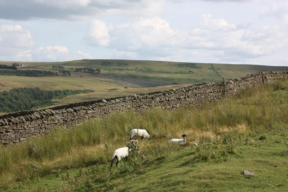 Weardale scene south of Frosterley